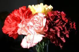 PTSA Sells Valentine's Carnations