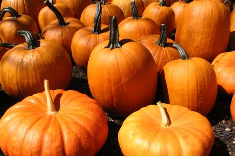 7 Pumpkin Purposes