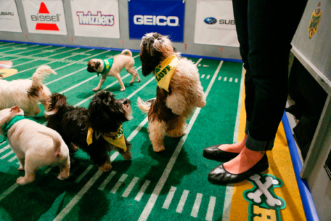 Review: Puppy Bowl XII