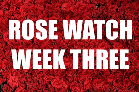 Rose Watch: Week Three