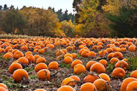 Fall Activities in the DFW Area