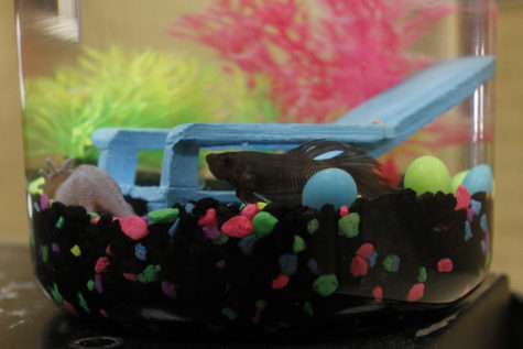 Peatre the Theater Fish: Just Keep Swimming
